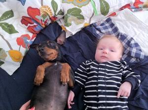 Hunden Wilson och bebisen Manfred ligger i sängen och myser.