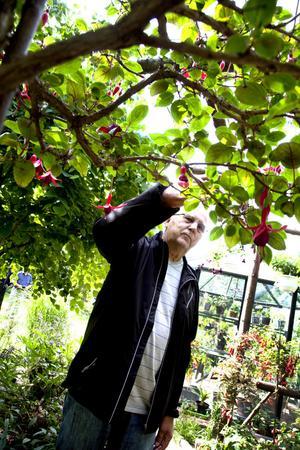 – Jag är här för att titta på en oerhört vacker trädgård och för att få tips, säger Karl-Göran Sjöstrand från Furuvik.
