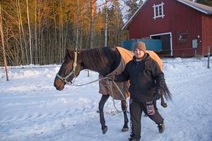 Jerry Strömstedt tar in Kenzi för natten. Familjen har planer på att göra en liten träningsslinga för hästar och hoppas att den blir klar till sommaren.