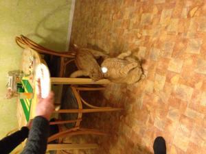 Jan håller på och fixa mat då brukar Rakke sitter så och väntar kom igen nu jag hungrig mat mat!!!!