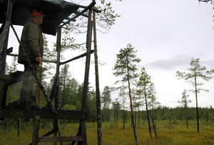 Två björnar har blivit skjutna i Västernorrland under den pågående björnjakten.