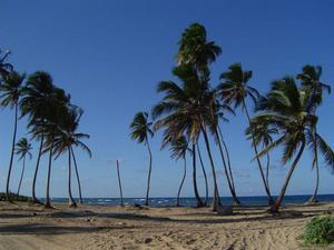 Allt fler stränder i Dominikanska republiken köps av reseföretag och stängs för befolkningen. Foto: Stockxchng