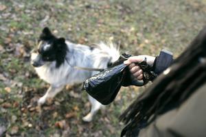 När hunden har gjort sitt behövs en papperskorg. Foto: Bertil Ericsson/TT