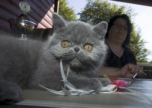 Best in show. Så här ska en ung kattföken se ut. Happy Day gör skäl för sitt namn.