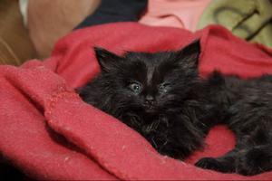 Nu kommer vintern och hemlösa katter får allt svårare att klara sig själva. Kattklubben Jämtkatten vill att fler ska hjälpa ensamma djur.Foto: Kattklubben