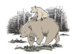 När ungarna är små och inte hunnit bli så snabba är det inte ovanligt att honan tar dem på ryggen när hon ska förflytta sig.