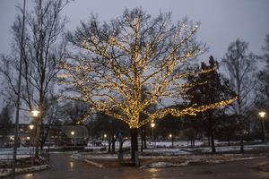 Inför julen 2016 upplystes ett träd i Vilhelminaparken, vilket distraherade en förare på Stationsvägen.