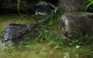 Normalt sett brukar Storsjön vara relativt förskonad från giftiga alger.