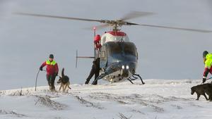 Hundföraren och fjällräddaren Ulrika Wärvik med hunden Tykko har just klarat av en flygtur med helikoptern. Nu väntar eftersök. Allt sker i högt tempo.