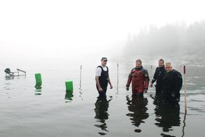 Ola George, Lennarth Högberg, Bo Ulfhielm och Anders Vikdahl står i skeppskyrkogårdens grunda vatten.
