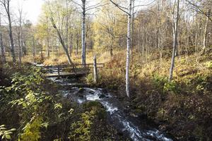 Ån forsar vackert ner mot Holmsjön. Den är drivkraften till