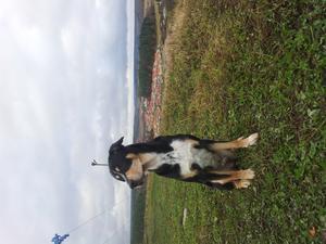 Denna bild togs när jag var ute på en promenad med min hund Eddie.
