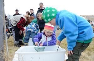 Rastälvens dag. Wilda Pettersson och Hampus Johansson undersöker vad som lever i älvens vatten.