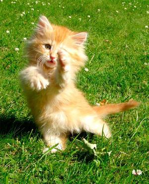 Dansa med mig!  Utomhus en härlig sommardag. Våra kattungar var lekfulla och man fick många fina, men även lite lustiga bilder!