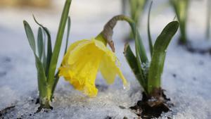 SMHI varnar för snöfall
