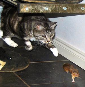 1. Otecknade Tom & Jerry. Häftigt va, skrev fotografen om sin katt Tigris.