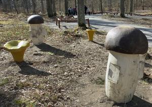 Det är lätt att hitta svamp i Mälarparken, de syns väl.