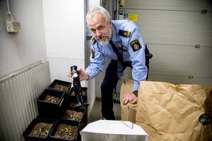 Polisen i Härnösand avslöjade en marijuanaodling på tisdagen. Polisen Jörgen Bladin undersöker beslagtagna plantor och utrustning som använts vid framställning av narkotikan.