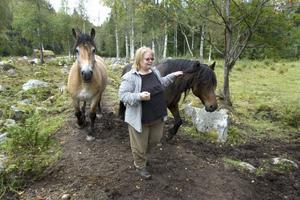 Larsbo gård har två egna dragare, Doris och Järvsöloyden.