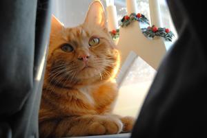 Zimba sitter på sin favoritplats och njuter av solen.