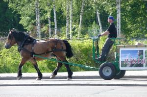 Underbar syn på Malmabergsgatan. Helt orädd flyger hästen fram, ser det ut som, mitt bland alla eftermiddags stressande bilister.