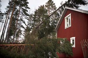 Tur i oturen för familjen Nord var att inget träd riktigt nådde boningshuset.