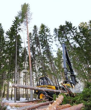 Nu riskerar skogsägarnas förtroende för Riberdahls utredning att undermineras. Det skadar i sin tur tilliten till den politiska processen och kan leda till att utredningens resultat döms ut på förhand.