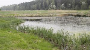 Hans-Peter Stülten undrar om ekosystemet i Alhagens våtmark mår lika bra som det tidigare har gjort.