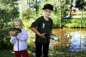 Greta och Axel Engblom har fått en riktigt bra fångst vid fisket i hyttdammen, tre rejäla regnbågar. Att fiska just där är riktigt spännande, tycker de, eftersom man ser fiskarna i det klara vattnet.