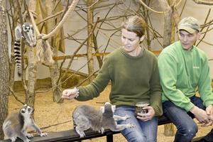 Maria och Henrik Ludvigsson har lyckats öka antalet besökare  från 17 000 besökare till över 40 000. Här får deras lemurer lite russin att smaska på. Lagom till påsk räknar paret med att öppna en ny utbyggnad av anläggningen som ska ha ett amerikanskt tema med skallerormar.