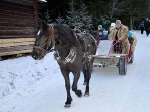 Karl-Gunnar Löjdahl körde häst och vagn. Syskonen Sanna Wikner, August Wikner och Isak Wikner åkte med tillsammans med mormor Eva Dahlberg.