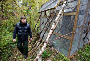 FÅGELBUR. Kristoffer Stighäll visar en av burarna där de utplacerade fåglarna först får sitta i en vecka innan de släpps ut.