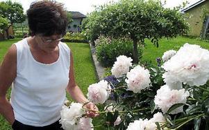 -- De här pionerna är praktexemplar, så länge blommningen varar, säger Monica Nilsson.