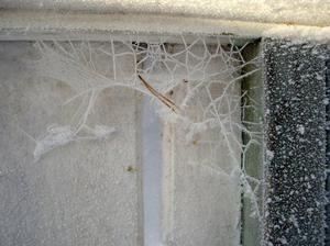 Spindelkonstverk i vinterskrud Den bilden är tagen vid min sommarstuga. Foto: Berith Sahlin