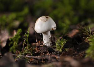 Hittade den här lilla svampen på Björnön. Kände att den var helt klart värd att föreviga på kort och jag tror svampen vart nöjd med resultatet..