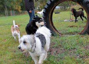 En hundrastgård är något som har varit efterfrågat länge i Norrtälje.