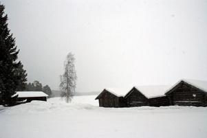 Rester från den gamla nedlagda tjärfabriken i Born har läckt ut i marken vid sjön Ljugaren,