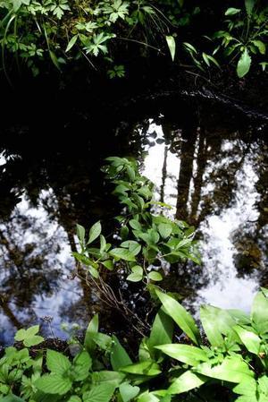 VATTENKLART. Den ovanliga hydrologin, med många rikkärr och bäckar är ett kännetecken för Långhällskogen.