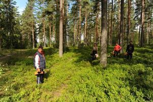 Bärplockarna som kommit till Sverige och nu Avesta har haft svårt att tjäna pengar på årets bärskörd.