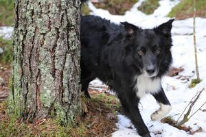 Lupus leker tittut i skogen!!