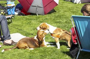 Hundägare fick en chans att träffas - och deras hundar också.