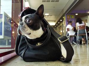 Mops redo för resa.