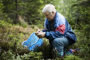 Svampkonsulent Stig Norell på jakt efter svamp i skogarna utanför Härnösand. Det ser ut att bli ett bra svampår, konstaterar han.