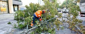 Det är mycket jobb med att ta ner stora träd.