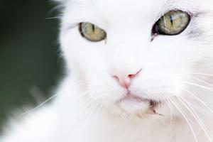 På en fotopromenad i Surahammar möttes jag av denna katt som jag genast fotade. Jag som älskar att fotografera och få sådana här tillfällen tog genast upp kameran och tog några bilder. Denna bild blev den som jag vill ska tävla om veckans bästa bild.