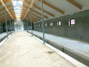 Så här ser det nya stallet ut inuti. I stället för spiltor byggs boxar där hästarna kan röra sig fritt.