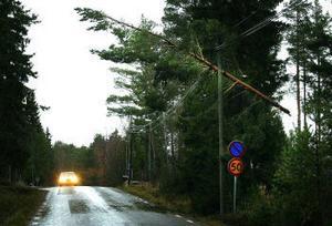 I Hartungsviken hade en talltopp gått itu och fallit ner över en ledning. Där blev den hängande i ett vågat balansstycke.