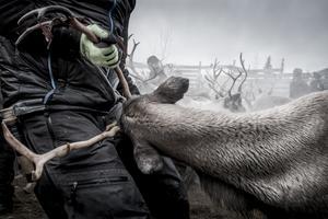 Arkivbild: Magnus Hjalmarson Neideman / SvD / TT