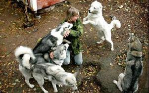 Malin har 30 hundar som hon kör draghundsrace med på vintern.Foto: Berit Djuse