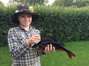 Jon Liljedahl (9 år) Abborre på 1.420 gram